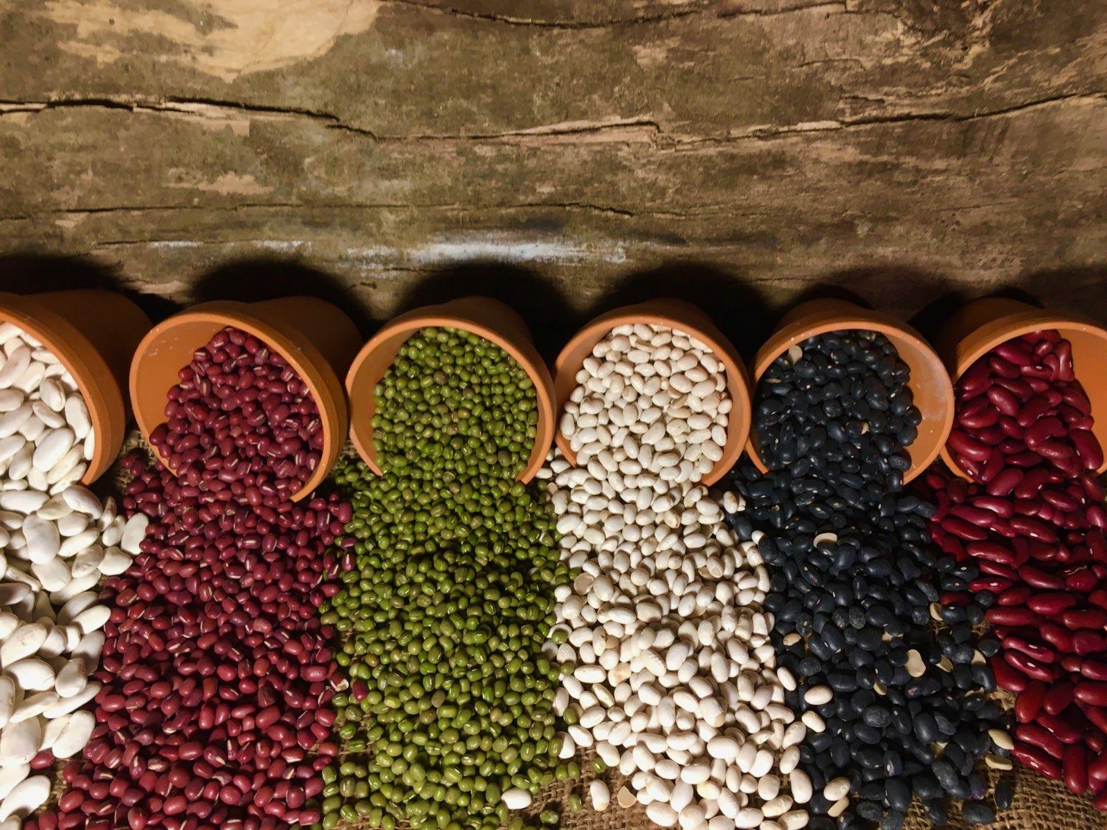 Haricots, Lentilles et oléagineuses Bio