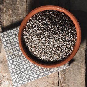 Lentilles noires bio Gratebio